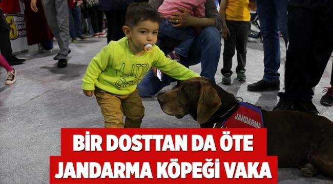 Bir dosttan da öte Jandarma köpeği Vaka