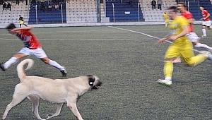 Köpeğin futbol aşkı