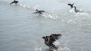 Gemiden sızan akaryakıt kuşlara büyük zarar verdi!