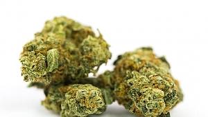 Kocaeli'de yeni çeşit uyuşturucu maddeler ortaya çıkmaya başladı!