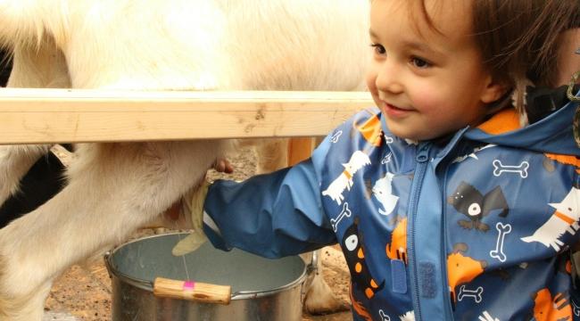 Minik izciler Ormanya'da Keçi sütü sağdı