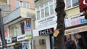 Belediye ağacı kesmek istedi vatandaş izin vermedi!
