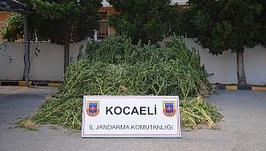 Kocaeli'de dev uyuşturucu operasyonları!