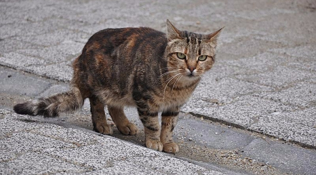 Sahipsiz kedinin ölümüne neden olan işçi, işten atıldı!