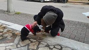 Gebe olduğunu anlamadı! Köpeği yolda doğum yaptı...