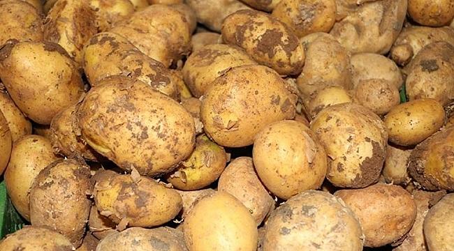 Türkiye patates fiyatı artışında dünya ikincisi!
