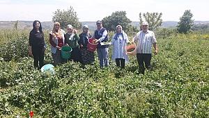 Büyükşehir çiftçilerin yanında