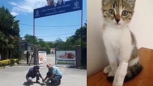 Gebze Sedaş'tan Örnek Davranış....  Ayağı kırılan yavru Kediye sahip çıktılar