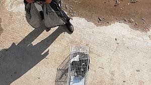 Dereye düşen kedi son anda kurtarıldı
