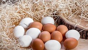 TÜİK açıkladı! Yumurta üretimi azaldı