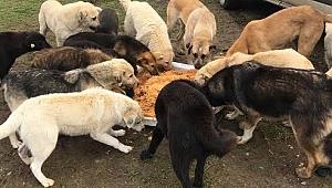 Sokak hayvanların gıda ve su takviyesi