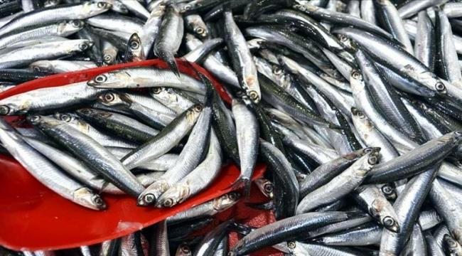 Balıkçıların yeni sezonda umudu hamsi