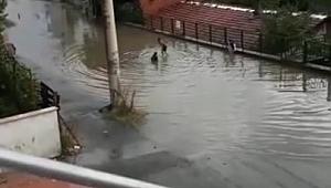 Gebze göle döndü, çocuklar yağmur suyunda yüzdü