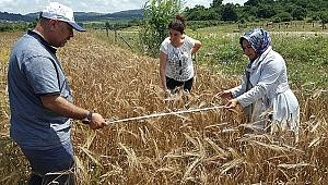 Kocaeli çiftçisi kazanıyor