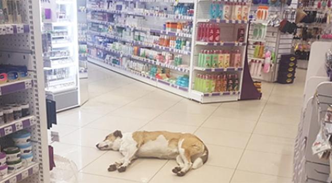 Alkışlar o mağazaya!