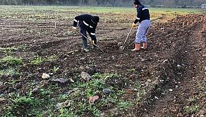 Yuvacık Paşadağ'daki İSAŞ dolgu alanı ağaçlandırıldı