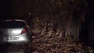 Fırtınanın devirdiği ağaç, otomobilin üstüne düştü