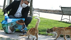 Dilovası'nda, sokak hayvanları unutulmadı