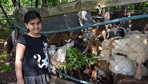 Yörükler, Gebze'de geleneklerini yaşatıyor