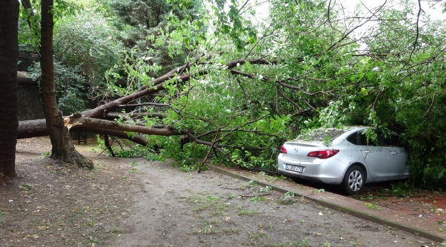 Ağaç, park halindeki otomobillerin üzerine devrildi