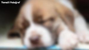 Darıca'da Köpeğe tecavüze kalkıştığı iddiasıyla gözaltına alındı