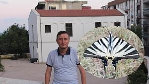 Nadir Görünen Kelebek Gebze'de Görüntüledi
