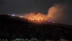 Gebze'de orman yangını!