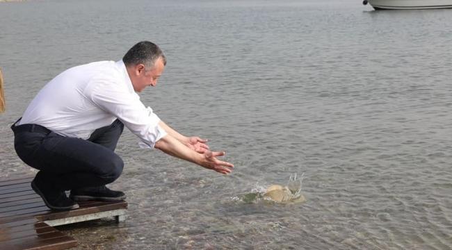 Yüzlerce Balık Körfez'e bırakıldı