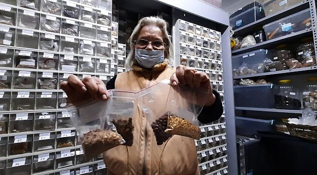 60 yılda bin 200 ata tohum toplayıp tohum bankası kurdu