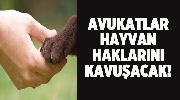 Avukatlar hayvan haklarını konuşacak